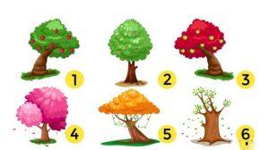 Verifica atent acesti sase copaci. Alege-l pe cel favorit si vezi care este calitatea ascunsa a personalitatii tale