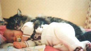 Copilul fusese abandonat intr-un subsol iar acest pisic il incalzea pentru a nu ingheta, uite povestea lor minunata