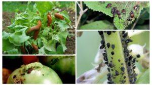 Tratamente bio pentru grădină și livadă. Cum scăpăm de BOLI ȘI DĂUNĂTORI FĂRĂ CHIMICALE!