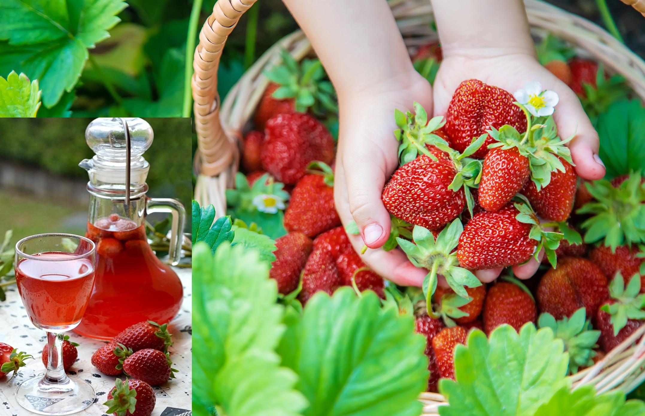 Prepararea siropului, lichiorului și gemului din căpșuni