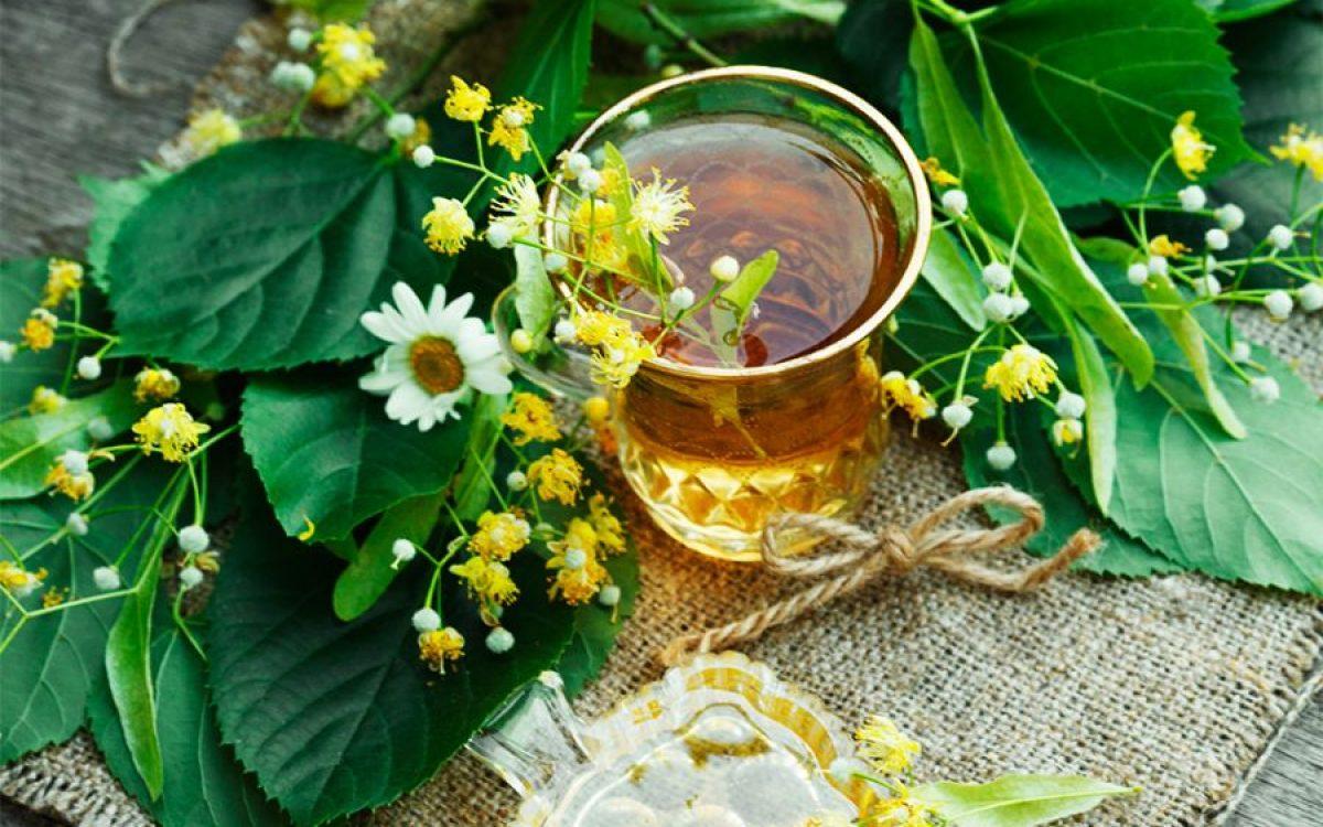 Vinul de tei. Preparare si beneficii pentru sănătate. Ideal raceli, gripe, boli ale plamanilor,sfera ORL). Se prepara si cu frunze uscate