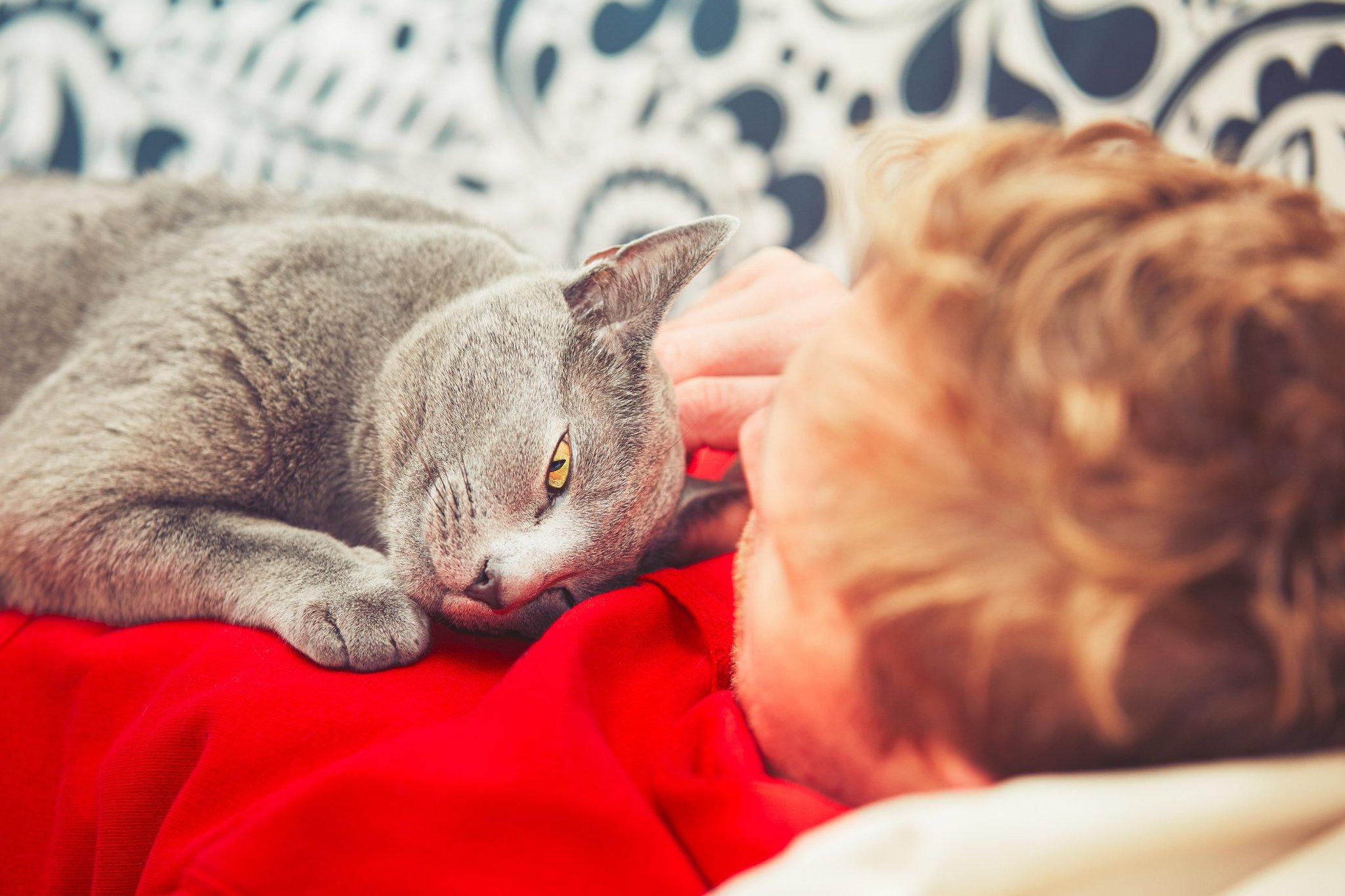 Pisica simte durerea unui om si vine si se aseaza pe locul dureros