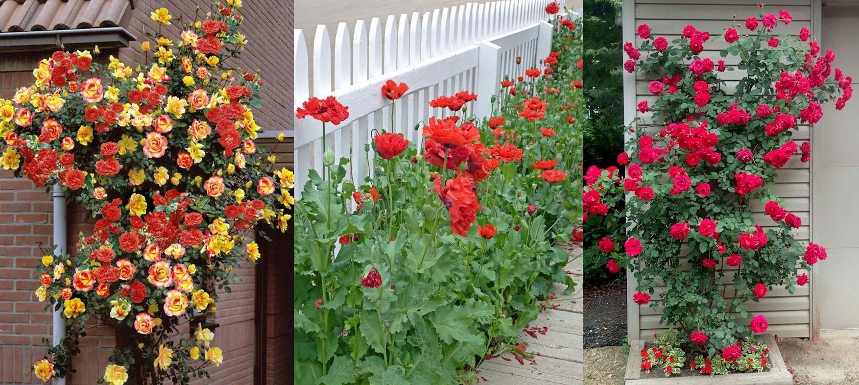 Trucuri pentru a creste flori frumoase intr-o curte micuta