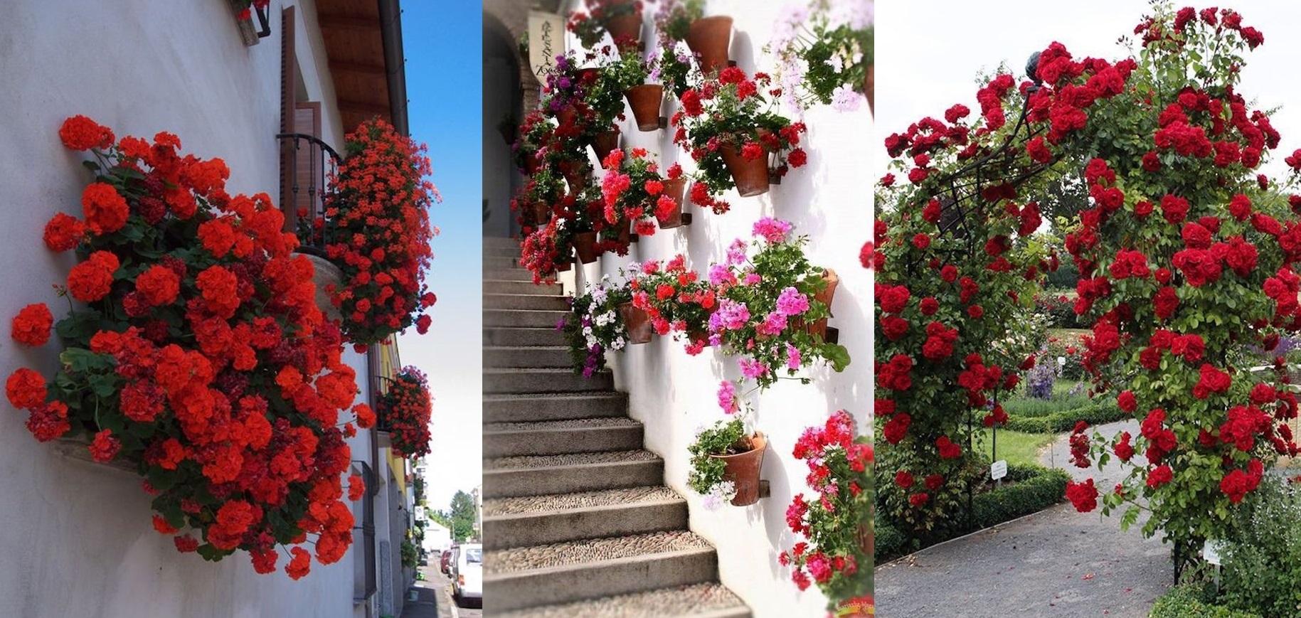 Aranjamente florale in explozie de culori pentru o curte fantastica